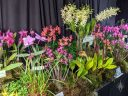 Orchid display table with different varieties of orchids, Pacific Orchid Expo 2020, Golden Gate Park, San Francisco, California