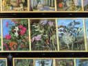 Artwork with orchids, The Marianne North Gallery at Royal Botanic Gardens, Kew in London, UK; oil paintings done by Marianne North, English biologist and botanical artist