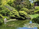 Plants reflected in pond with water lilies, topiary, cloud pruning, Japanese Tea Garden, Golden Gate Park, San Francisco, California